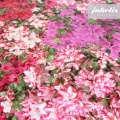 Wachstuch Fotodruck Blüten bunt I