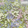 Wachstuch Fotodruck Blüten pastell I